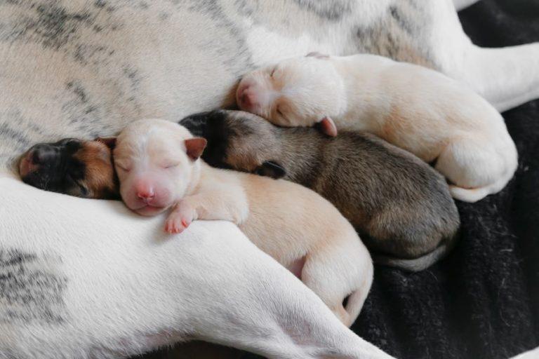 Pet Care Provider Financial Education Tualatin